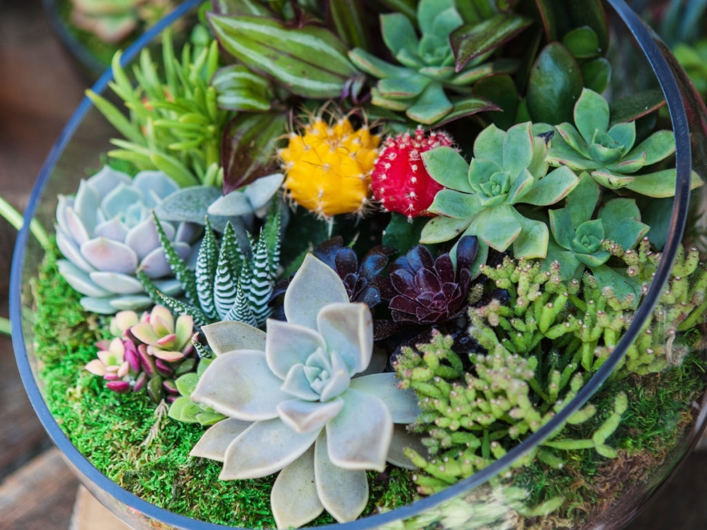 Mini jardim de suculentas em terrário de vidro, simples e bonito